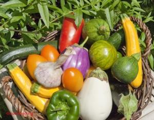 Légumes de l'été chez GuestCooking