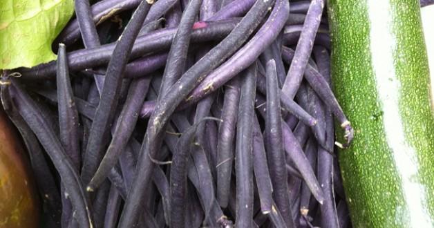Haricots vert violet chez GuestCooking